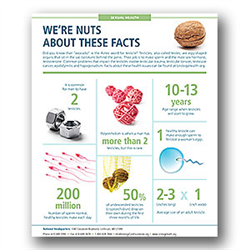 Testicle Health Infographic